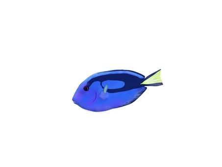 Illustration of okinawa fish