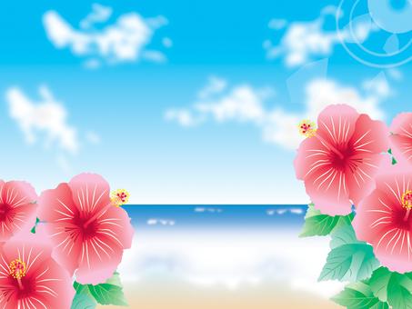 Sea _ Hibiscus 2