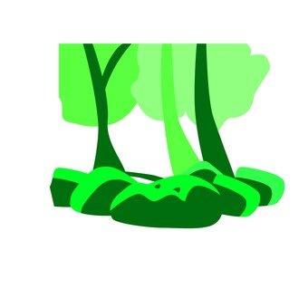 Woods