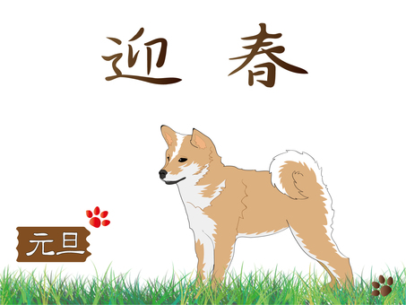 New Year's card dog (Shiba inu)