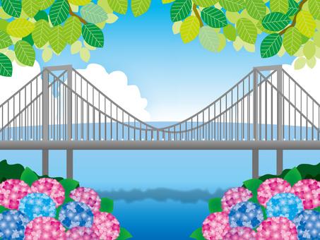 Hydrangea (23) daytime rainbow bridge