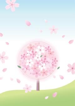Sakura 53