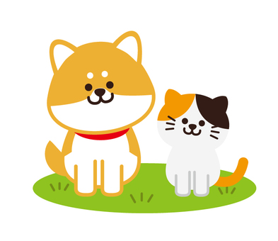 Shiba Inu and a cat (lawn)