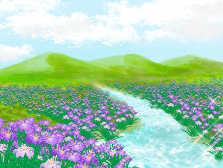 Distant view of irises