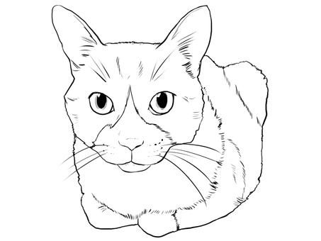 Barrel sitting cat