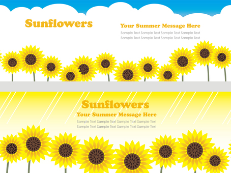 Sunflower background two kinds 1