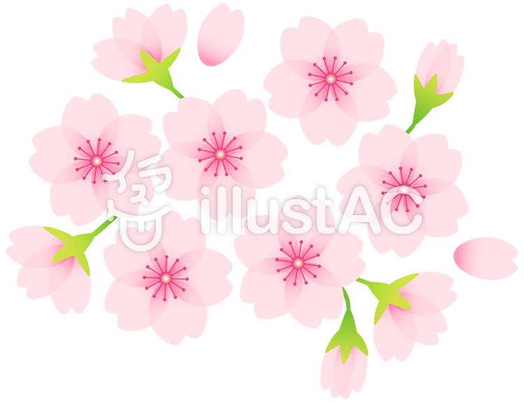 桜素材06のイラスト