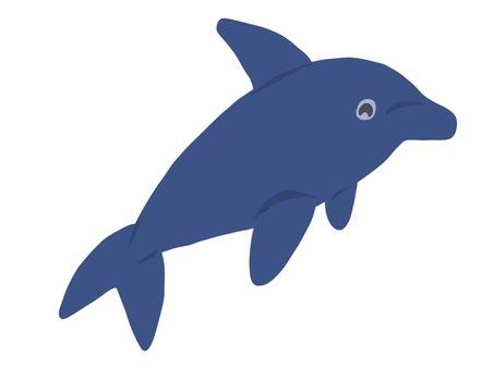 Sea fellow dolphin