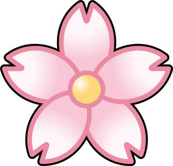 Flower - Sakura