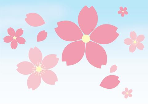 櫻花 - 藍天