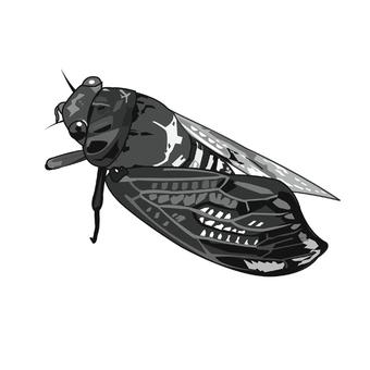 Abra cicada