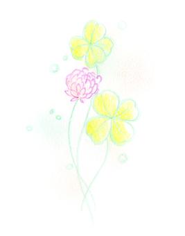 White clover 02