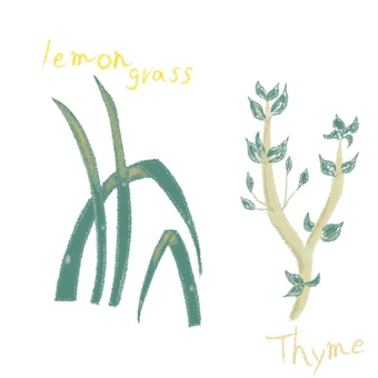 Thyme and lemongrass