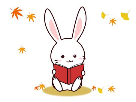 Rabbit (reading)