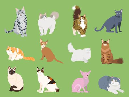 Cat set_02