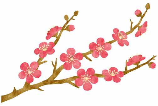 Plum blossoms / red plum