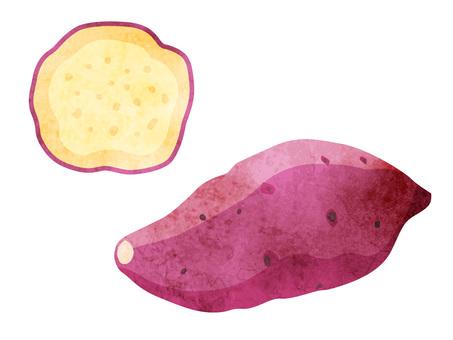 Ingredients _ vegetables _ sweet potato _ watercolor
