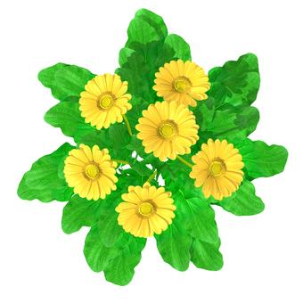 Gerbera _ yellow _ top