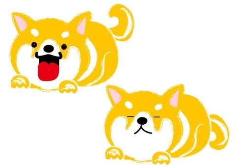 Shiba dog material