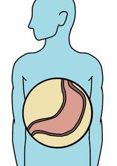Stomach illustration 001