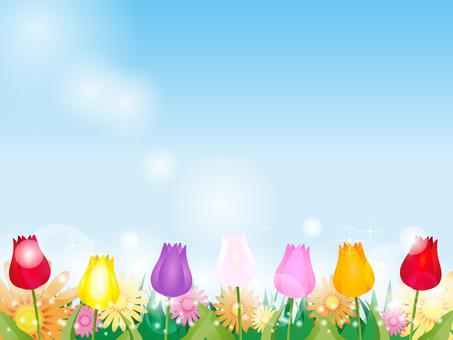 鬱金香和花背景2