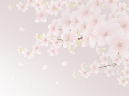 Cherry blossom background 7