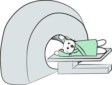 Nyanko健康檢查MRI