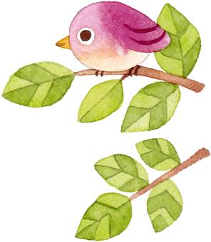 一隻小鳥追逐枝紫色