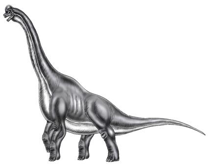 Brachiosaurus illustration