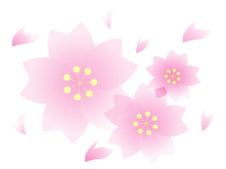 Sakura - thin