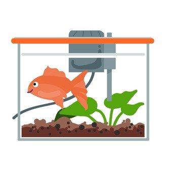金魚的水箱