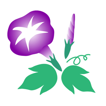 Purple morning glory illustration