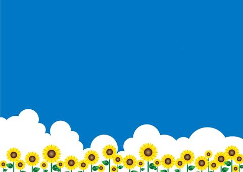 Sky · Cloud · Sunflower