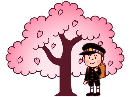 Freshman and cherry tree