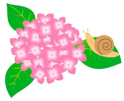 Snail and hydrangea (pink)