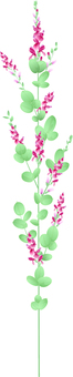 Real Hagi Flower