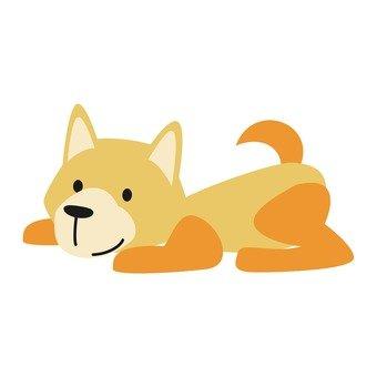 Dog - lying dog