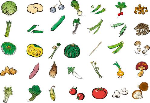 Vegetable illustration assortment, vegetable set