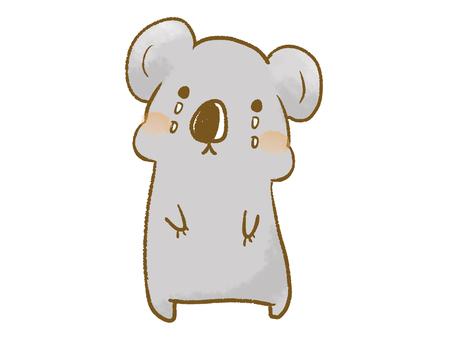 Koala tears