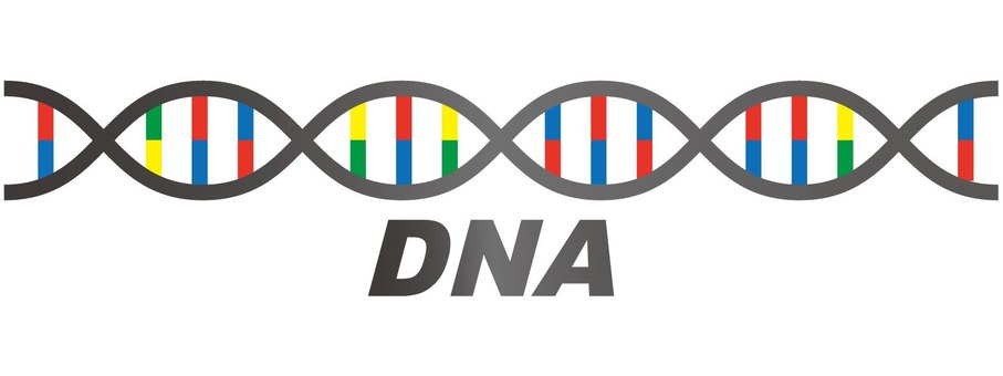 Double helix (DNA)
