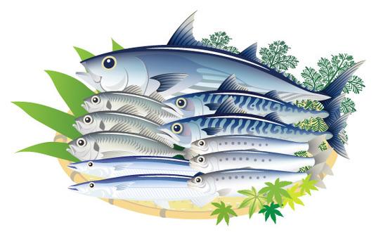 青魚 鰹 鯖 鯵 秋刀魚 鰯 白背景