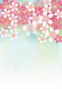 벚꽃의 꽃 66