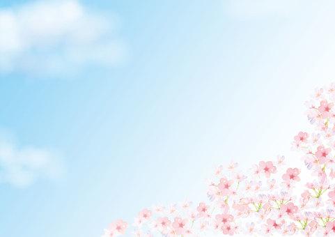 櫻花背景藍天
