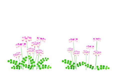 Astragalus field