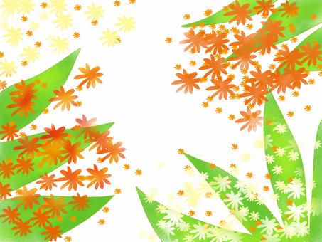 Flower of Dracaena