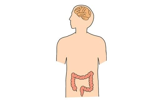 人間 臓器 脳 大腸