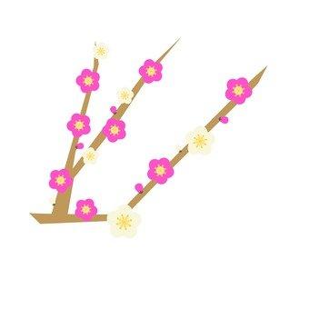 Plum branch