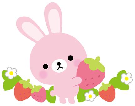 Usagi strawberry field