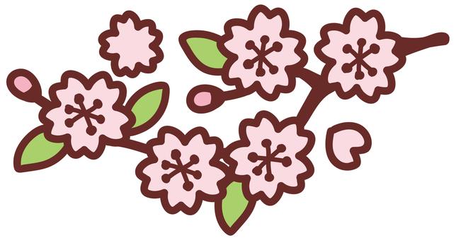 Cherry blossoms <branch>