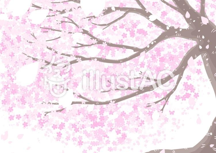 見上げた桜の木